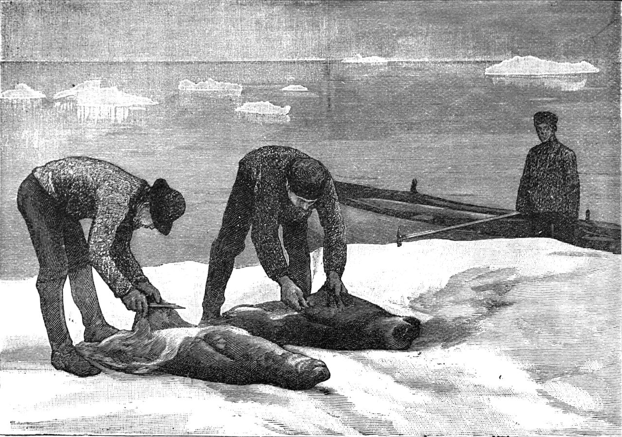 1280px-Seal-skinning_on_the_floes.jpg